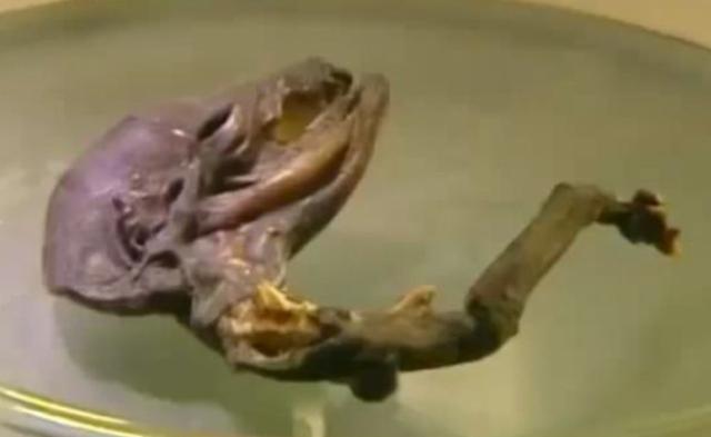 Gambar Alien Yang Ditemukan Di Rusia.