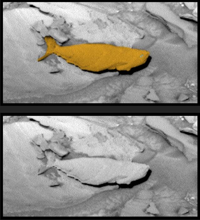 Objek Seperti Ikan Raksasa Didalam Foto NASA di Planet Mars