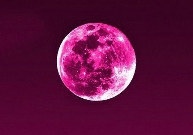 Pink Moon Bulan Berwarna Pink